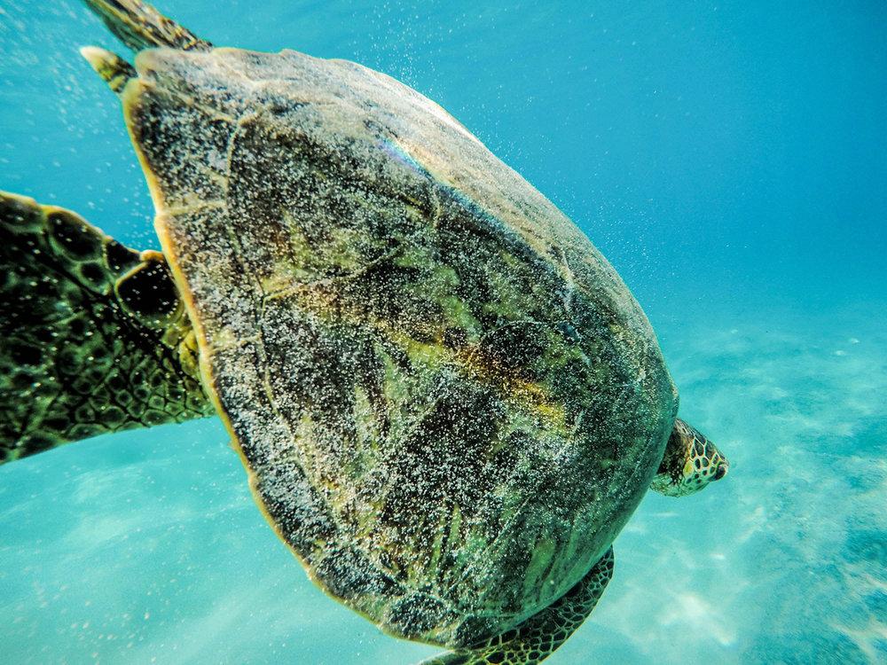 turtle rainbow hawaii
