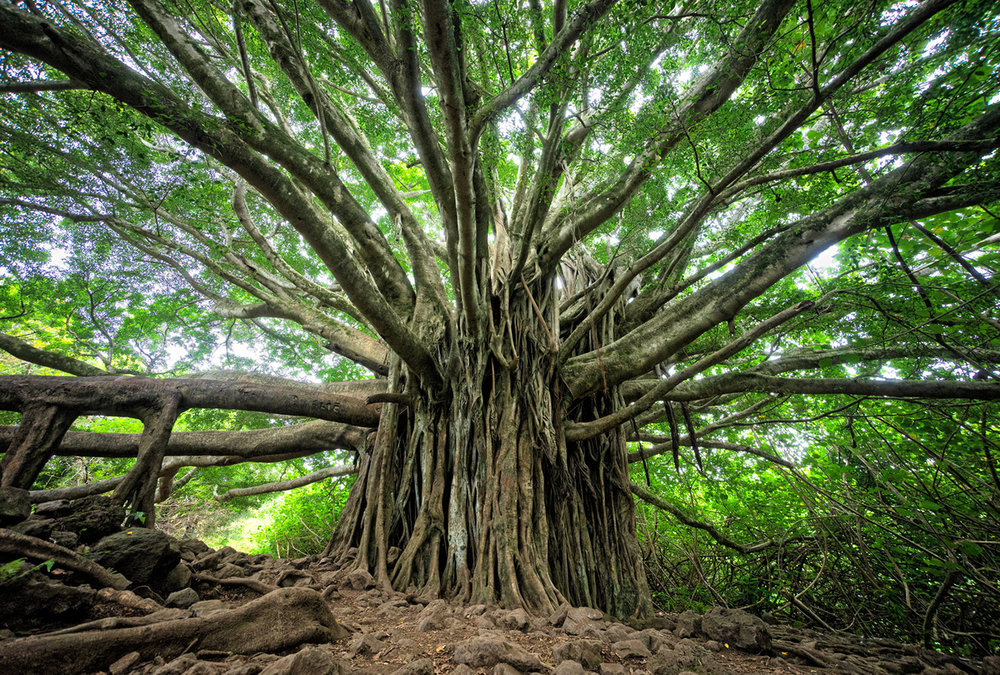 tree of life hawaii