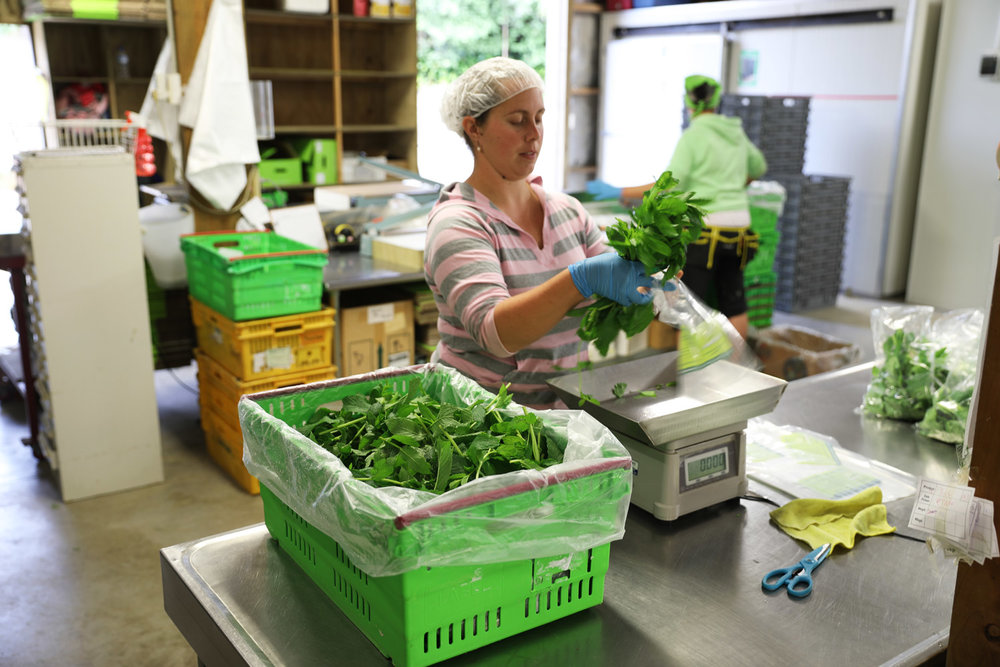 Fast, efficient andwell trained - Our skilled team of staff help us make-ready over 70 tonnes of fine culinary herbs every year.