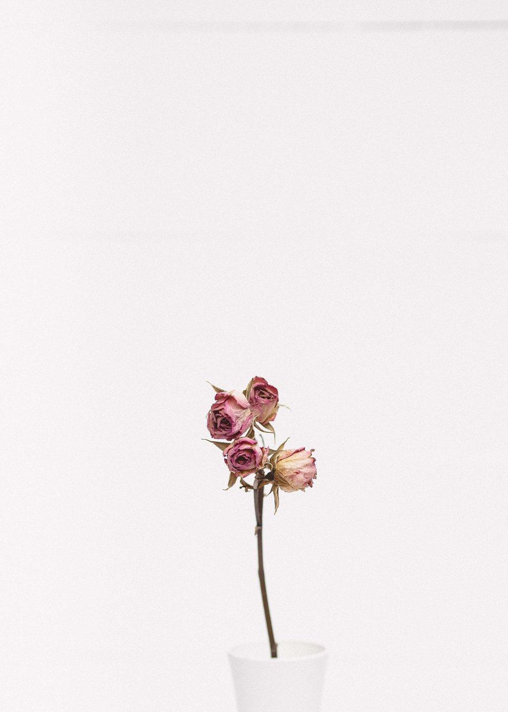 Send FlowersTo The FCC -