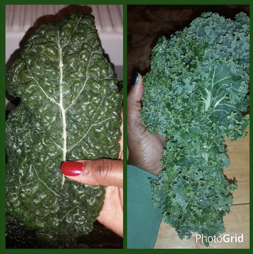 Kale Yeah! 2 of the 3 main types of kale: Dinosaur (aka Lacinato) and Curly kale.