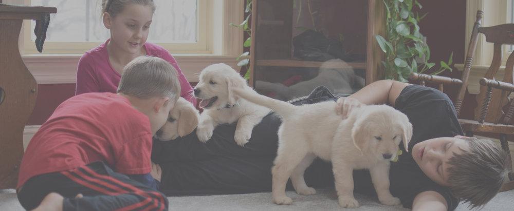 Puppy sales -