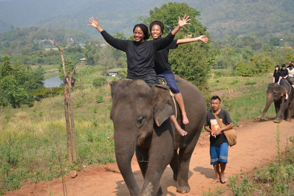 An epic day with elephants in Chiang Mai
