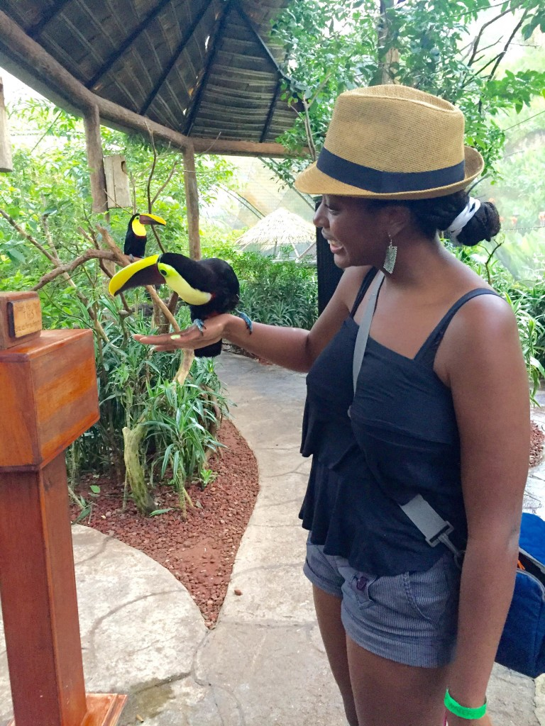 Hanging out with Toucans at the Paz Wildlife Conservation Center