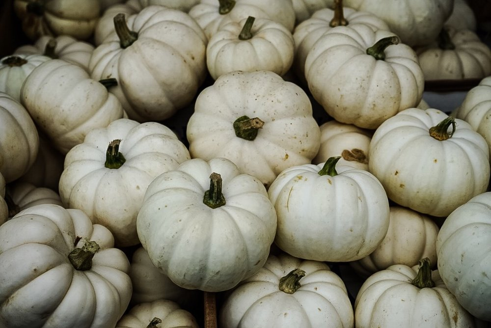 I picked up white mini pumpkins at the Union Square Greenmarket--the newest additions to my growing stash of decorative gourds.