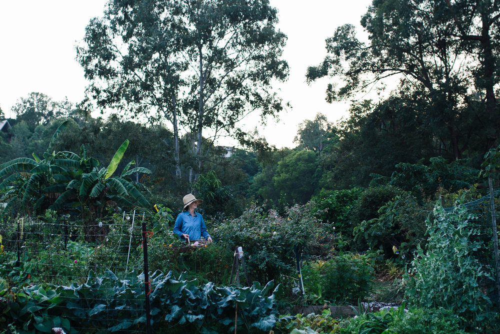 Gillian in her Brisbane allotment.