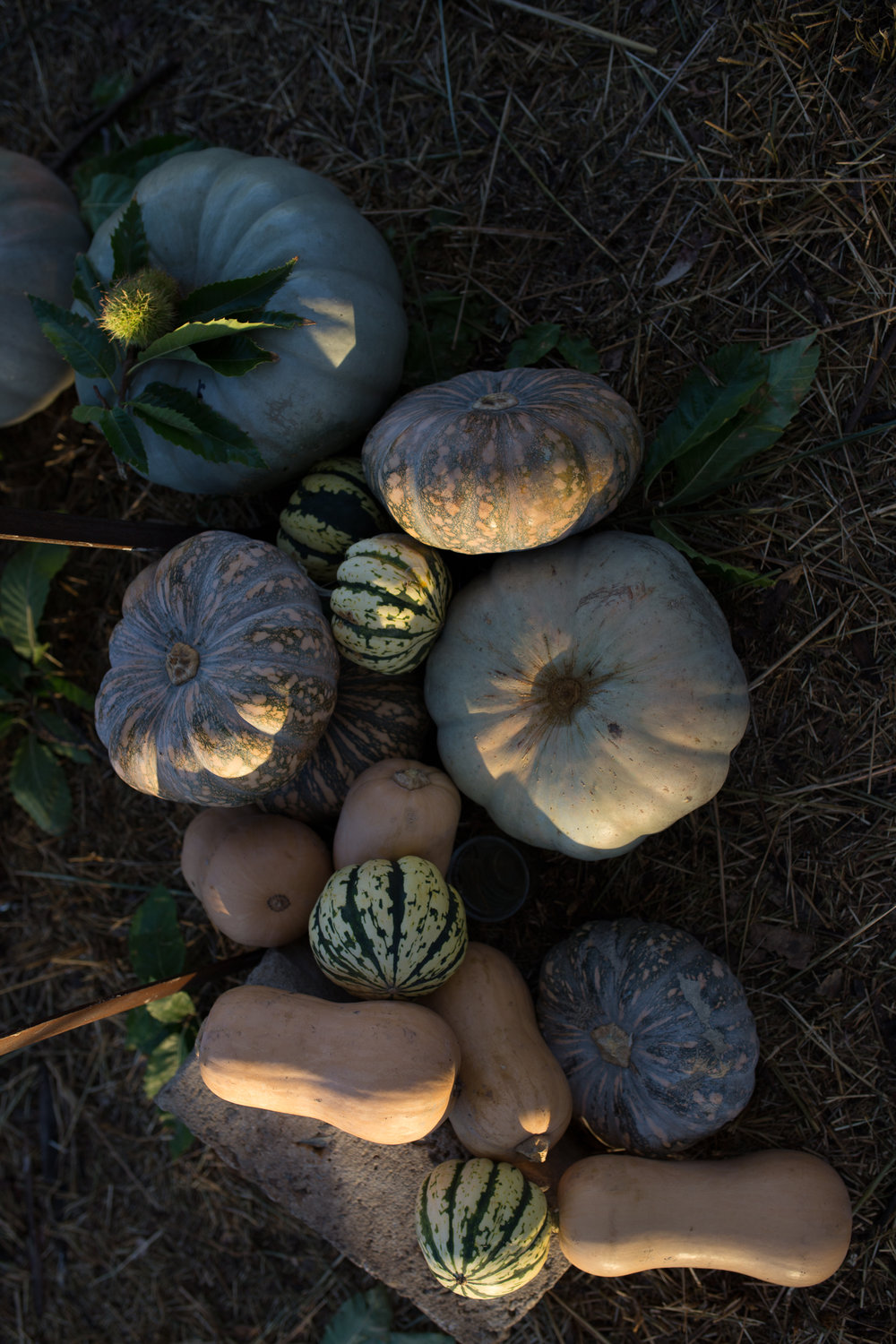 Autumn pumpkins from the neighbour