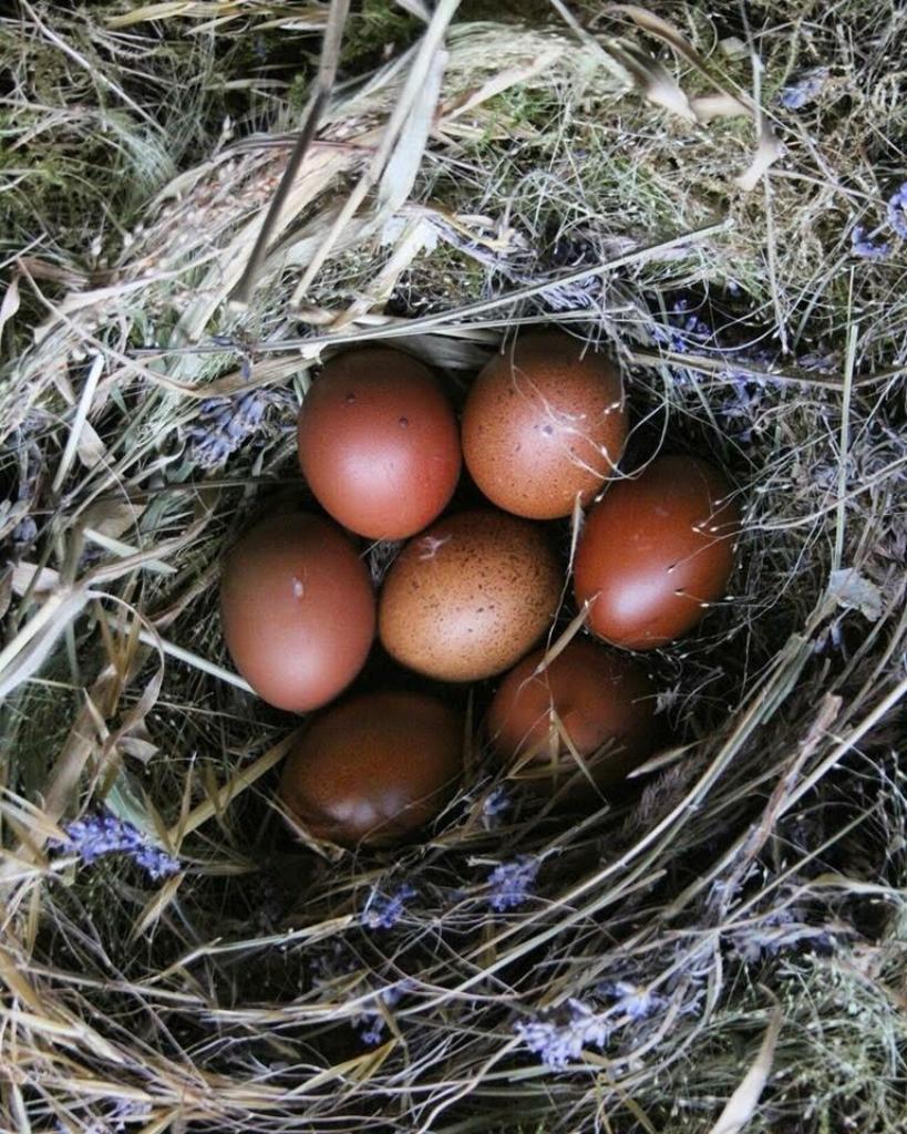arthur parksinson eggs.jpg