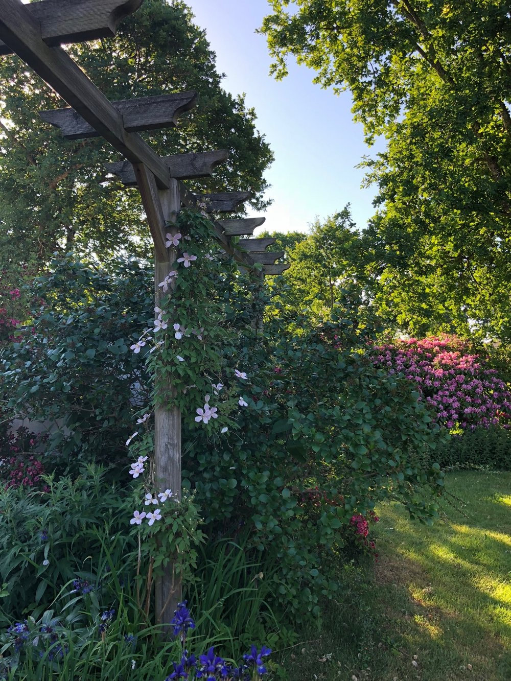 The garden is alive with flowers, birds and insects. Arild, Sweden.