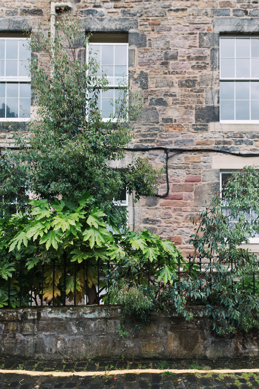 Our AirBnB in New Town, Edinburgh - complete with a Eucalyptus out the front. Here is the  link  just in case you want to book it.