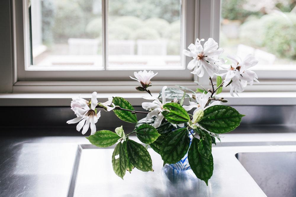 Magnolia's from Annabelle's mum's garden
