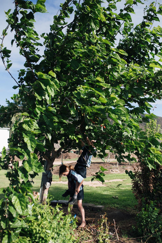 The children picking mulberries