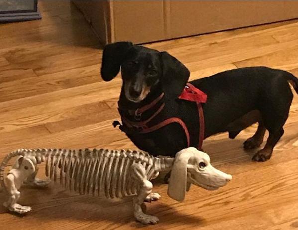 skeleton wiener.png