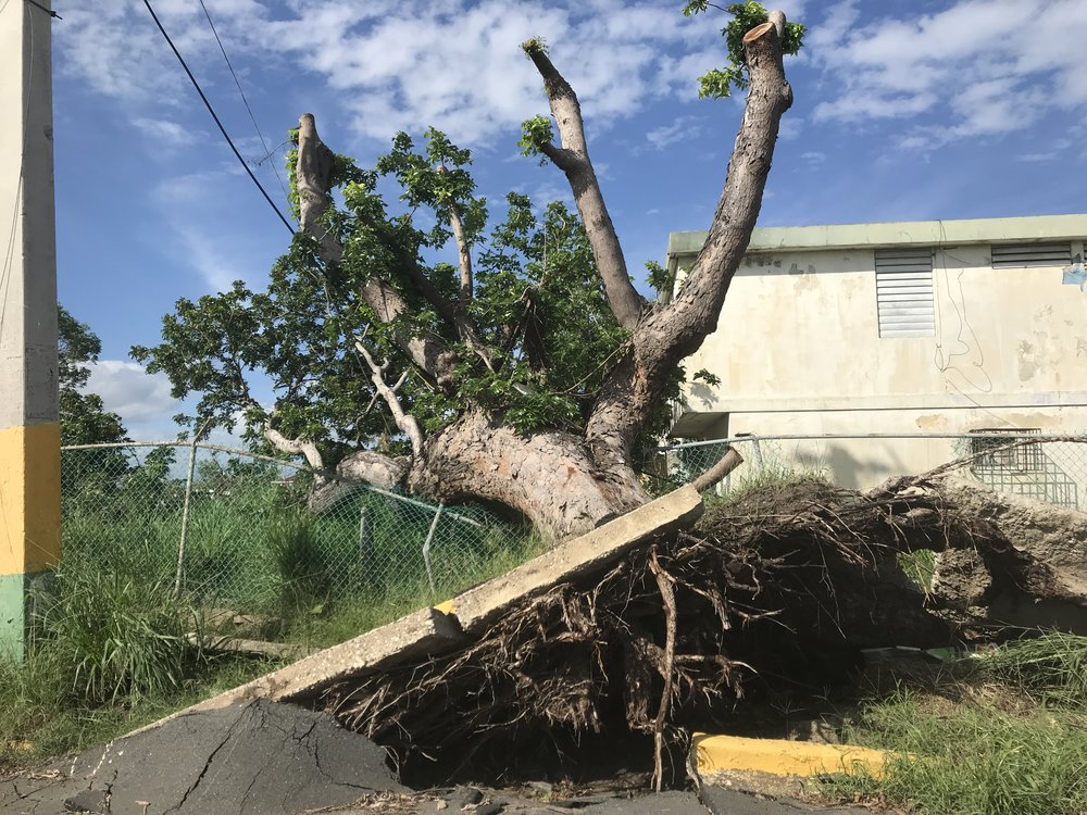 Evelyn saw hundreds of uprooted trees on the island during her week long service trip to Puerto Rico in November 2017.