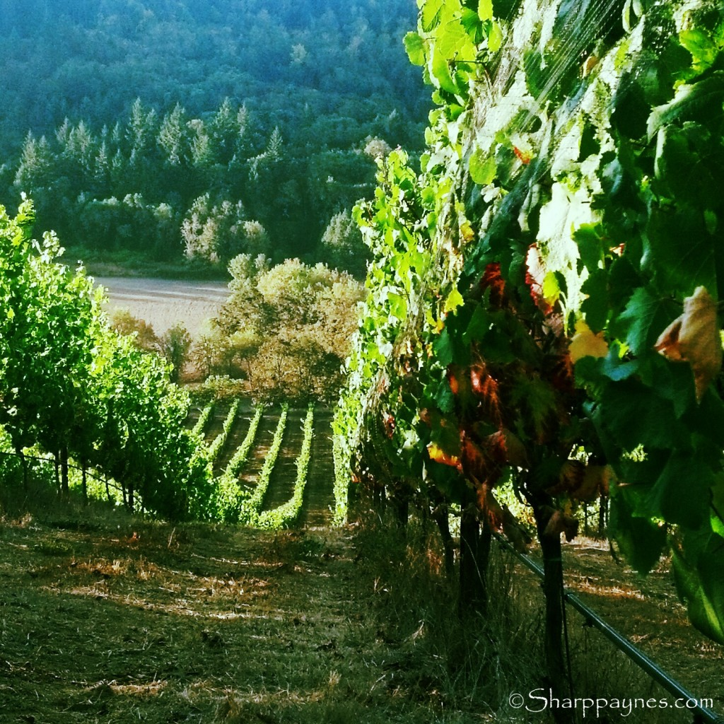Harvest of time, vineyard, making memories