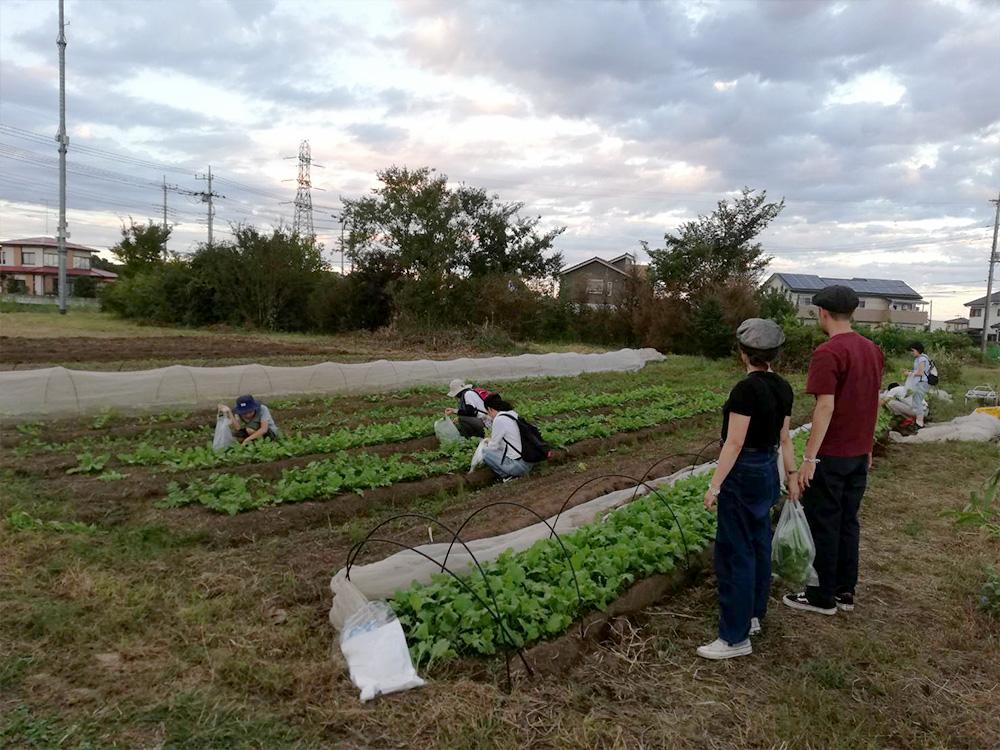 種まきチームもいつつ野菜の間引きチームも。