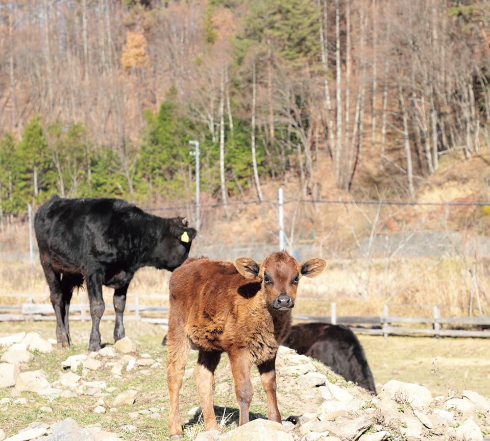 モ〜、牛もいるよ!