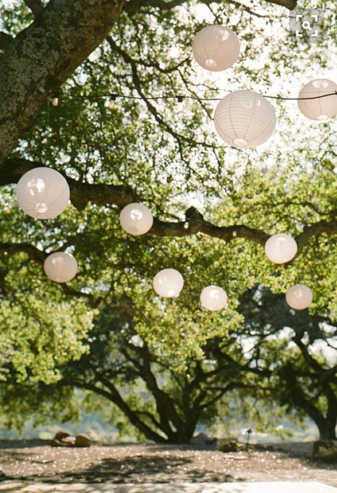 lanterns+in+tree+.jpg