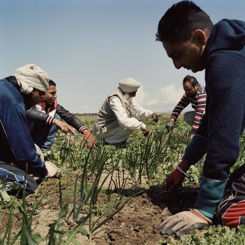 Sikh farmers_01.jpg