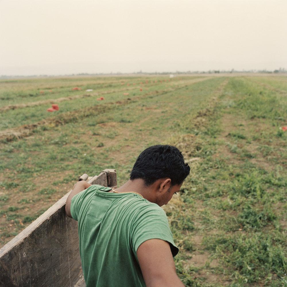 Sikh farmers_23.jpg