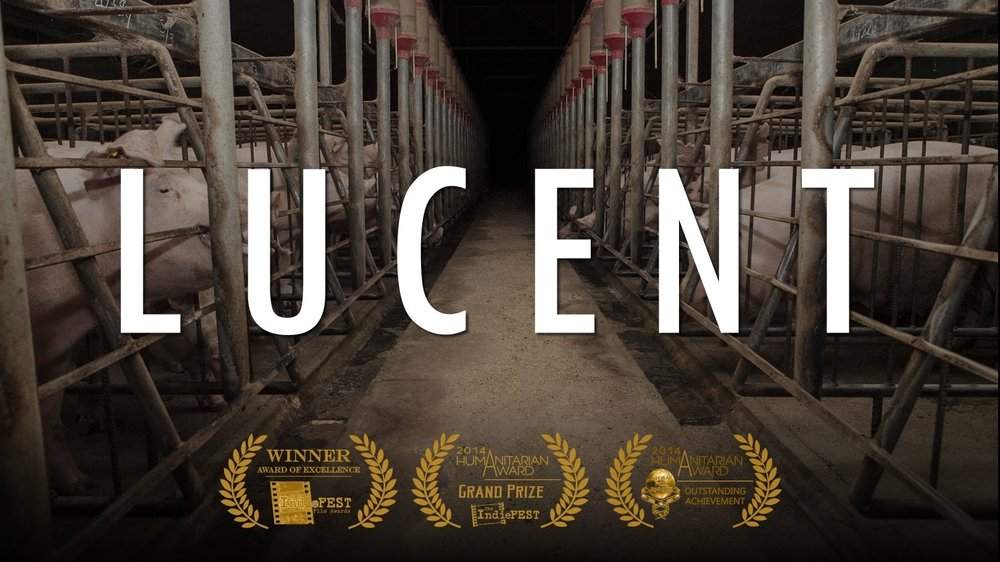 Lucent (Australian pork<br>industry documentary)