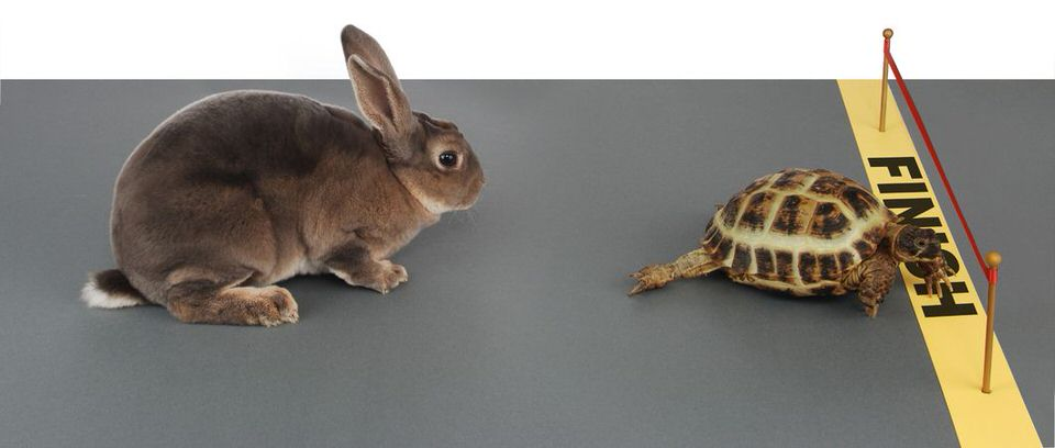 7053292 - turtle winning the race against a rabbit