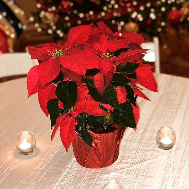 Poinsettias and tea lights make for the perfect setting at this holiday party for Texas Regional Bank! Who says work parties aren't fun? Happy holidays! #happyholidays #holidaypartiesarethebest #cristmasworkparty #hillcountryvenue #crickethillranch