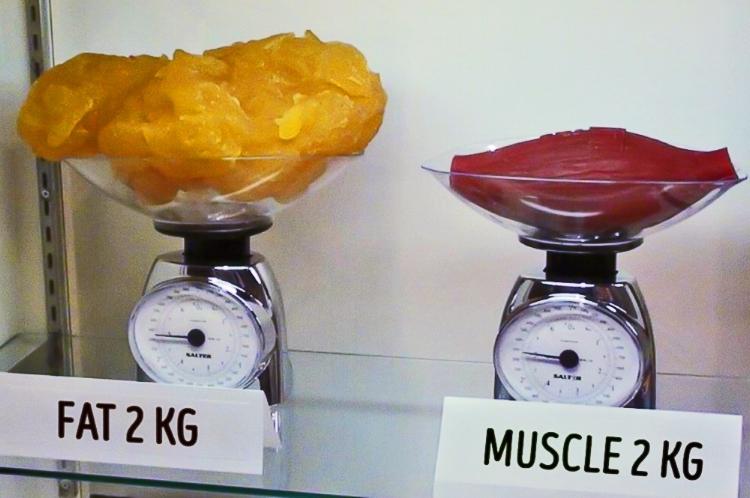 Pesa de gordura vs peso muscular