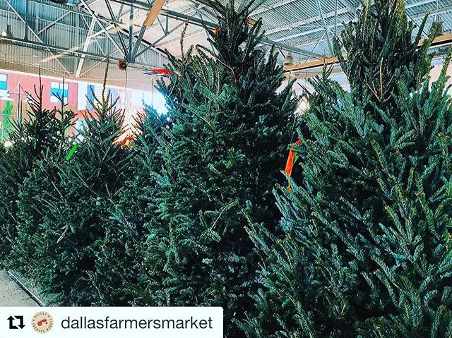 #Repost @dallasfarmersmarket ・・・ TREEmendous. 🌲✨ Get your FRESH Christmas trees inside The Shed Saturdays and Sundays. 😍 #mydtd #supportlocal #dallasfarmersmarket