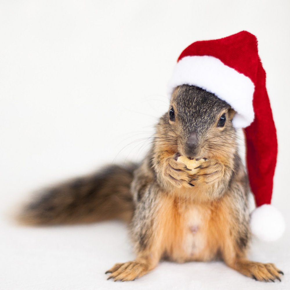 Squirrels-With-Hats-Wallpaper.jpg