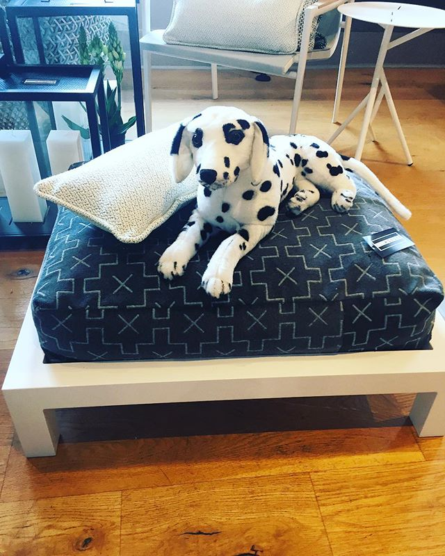 With a powder coated frame and custom cushion in any of our outdoor fabrics, Boywonder Design offers a stylish lounging bed for our four legged friends.  #pamperedpooch #dogbed #fourleggedfriends #dogfriendly #petaccessories #dogstyle #outdoorstyle #performancefabrics #dogsofinstagram #boywonderdesign