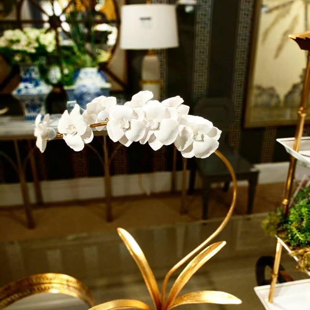 Orchid in a stand #ChelseaHouse#HighPointMarket