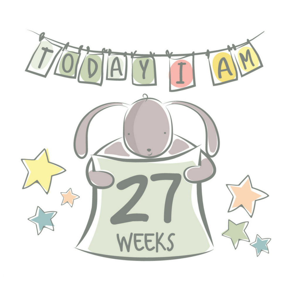 27 Weeks Curved.png