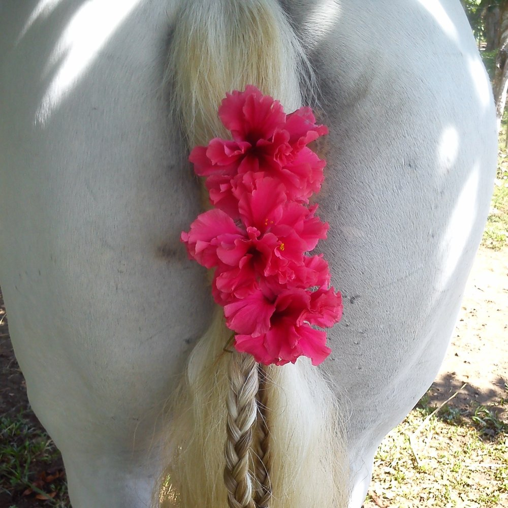 horse butt with flowers.jpg