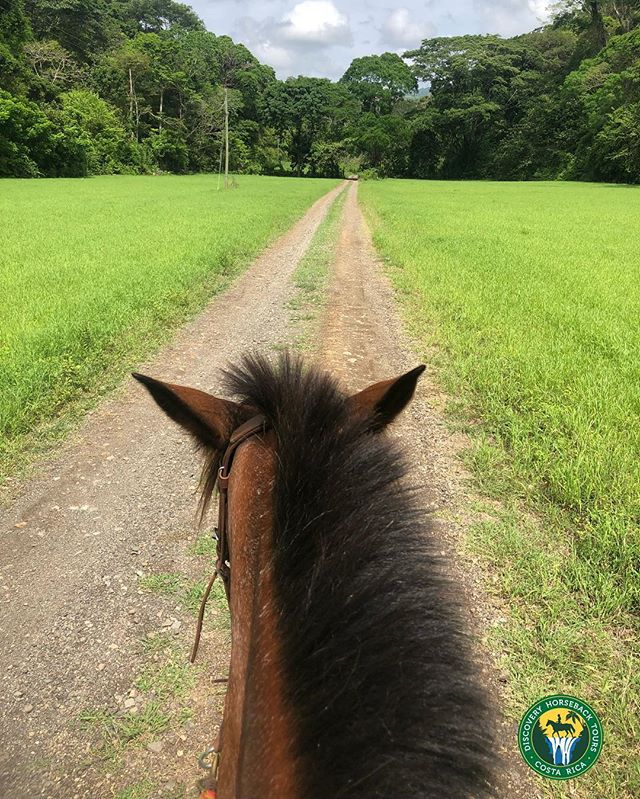 Beautiful day for a ride 🌞  #horses #horse #horsesofinstagram #horseshow #horseshoe #horses_of_instagram #horsestagram #instahorses #wild #mane #instagood #grass #field #farm #nature #pony #ponies #ilovemyhorse #babyhorse #beautiful #pretty #photooftheday #gallop #jockey #rider #riders #riding #discoveryhorsetours #costarica #jaco