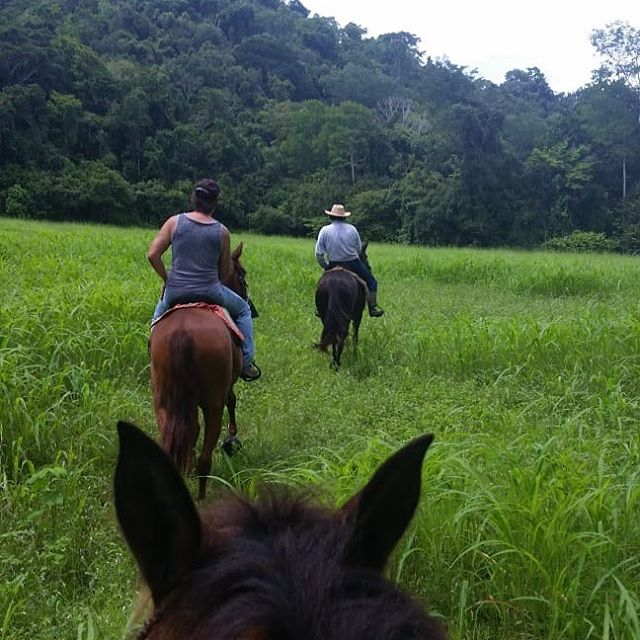 Rides through La Quina farms  #LaQuina #costarica #horses #discoveryhorsetours #horsetours #puravida #farm #jaco #green #nature #horsephotography #horsesofinstagram