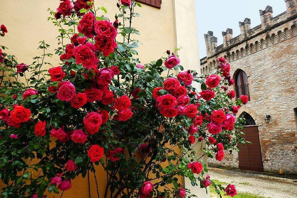 Guarini-Matteucci-vini-wine-Castelfalcino-bouganville-giardino-villa.jpg