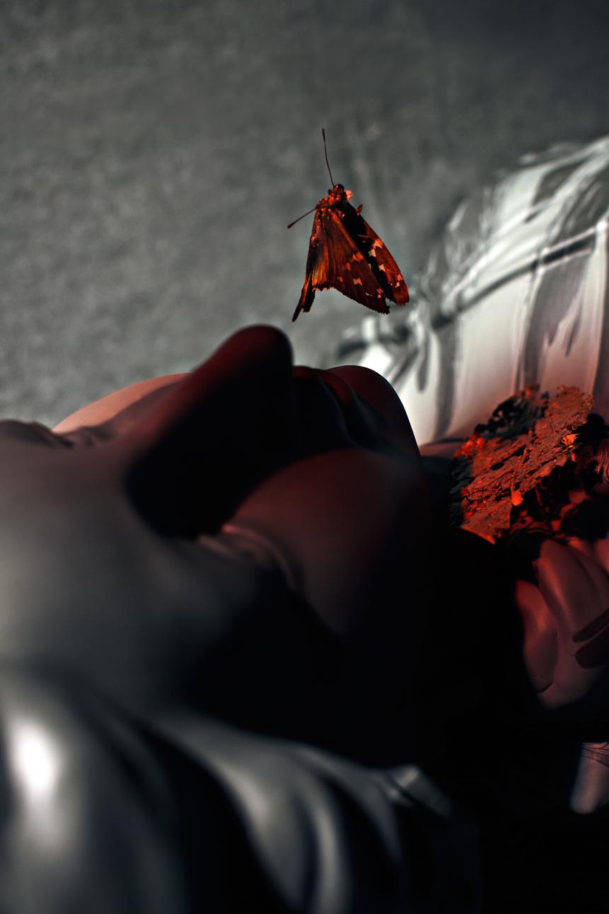 falling-butterfly-by-ransom-ashley-(1).jpg
