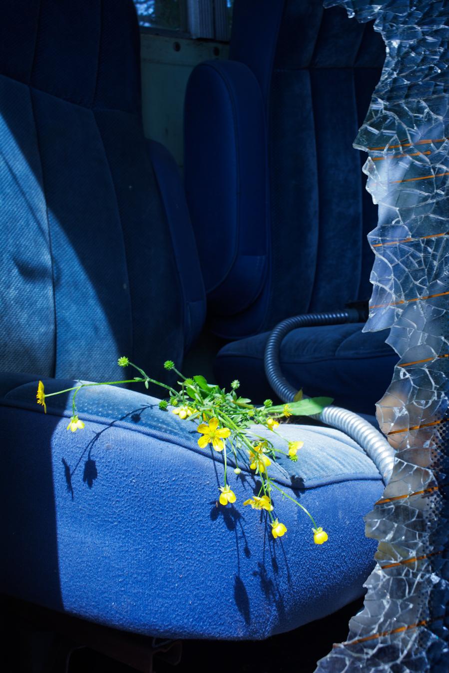 wildflowers-by-ransom-ashley-.jpg