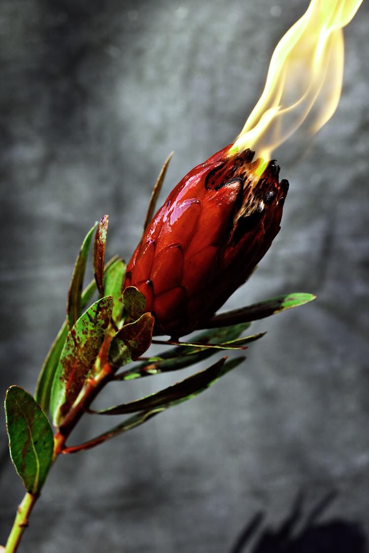 flower-destruction-by-ransom-ashley--.jpg