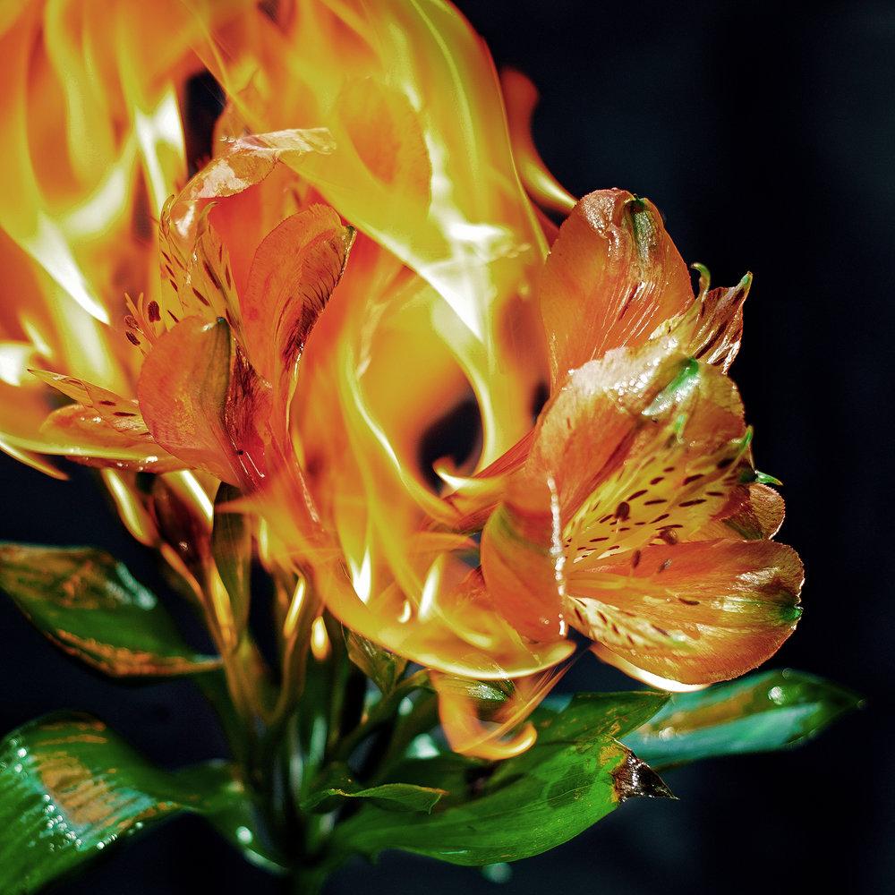 burningflowersss-2-.jpg