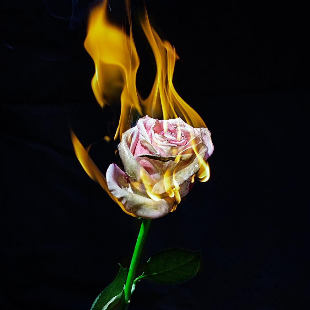 rosefire-ransom-ashley-.jpg