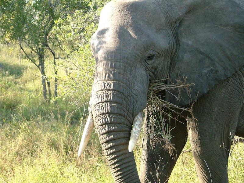 Elephant_Gun