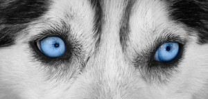 Blue-Eyes-680x325