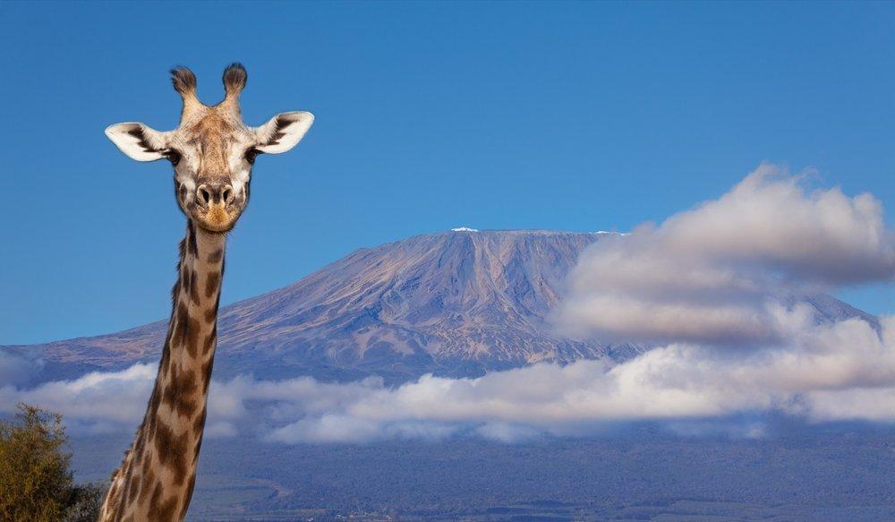 Orphans-Aid-International-Sue-Van-Schreven-2019-Supporters-Trip-Mt-Kilimanjaro-Africa-2-2000px.jpg.jpg