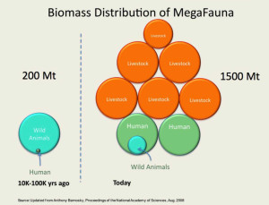 BIOMASS DISTRIBUTION OF MEGAFAUNA (2018).jpg