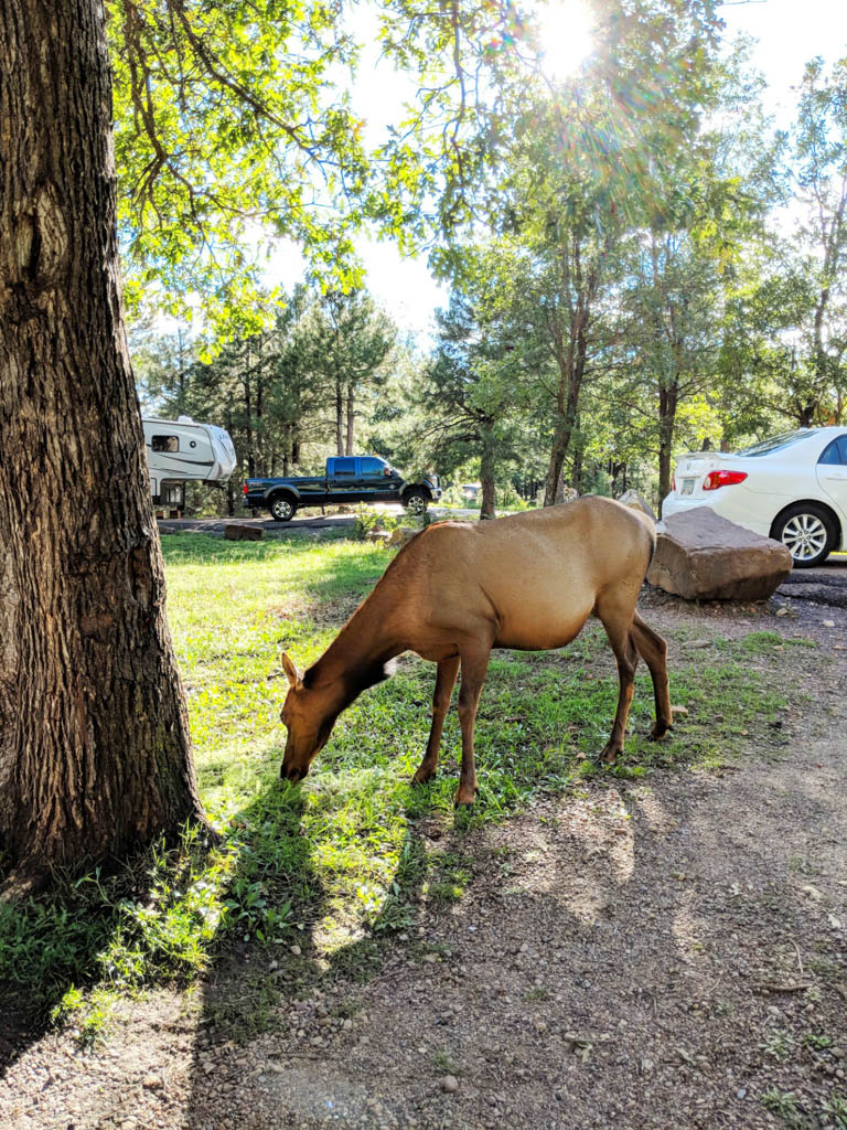 Camping_in_Payson_10