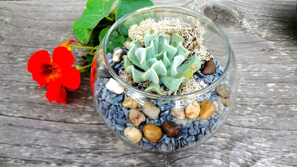 succulent terrarium weddings events