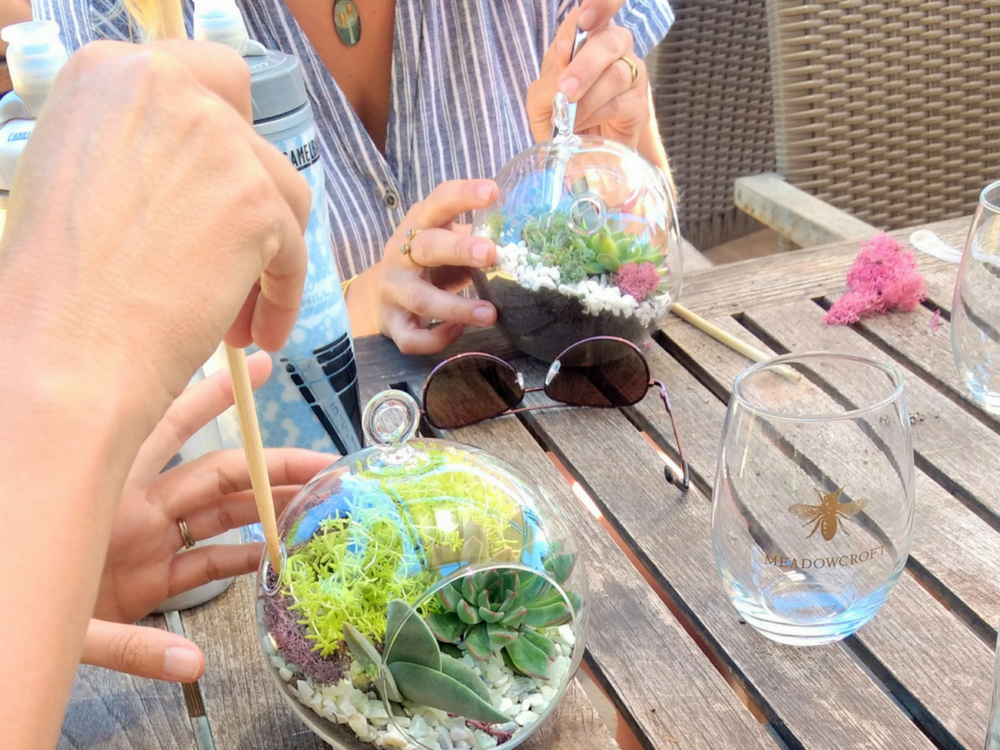 workshops petaluma san francisco bay area succulent terrarium