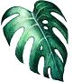 petaluma santa rosa sonoma bay area san francisco plant store succulents terrariums
